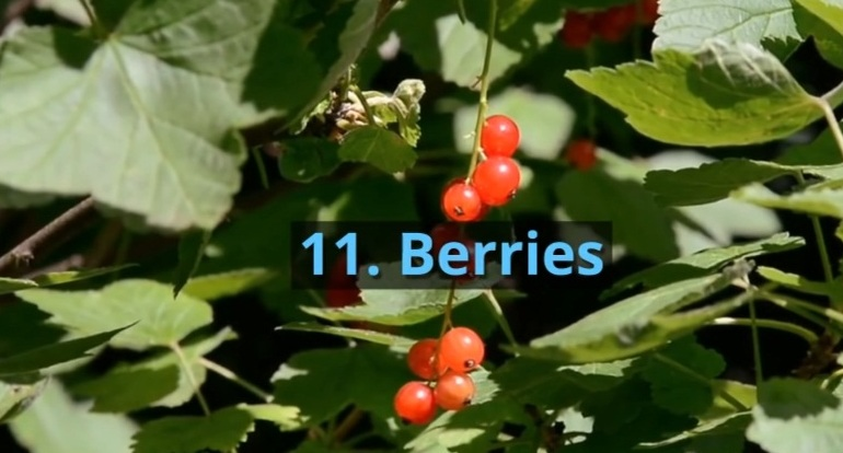 11. Berries