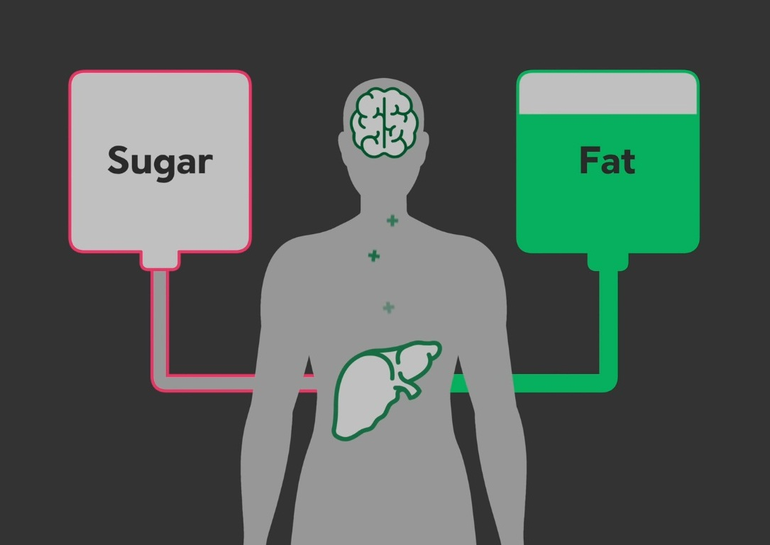 Sugar To Fat in Liver