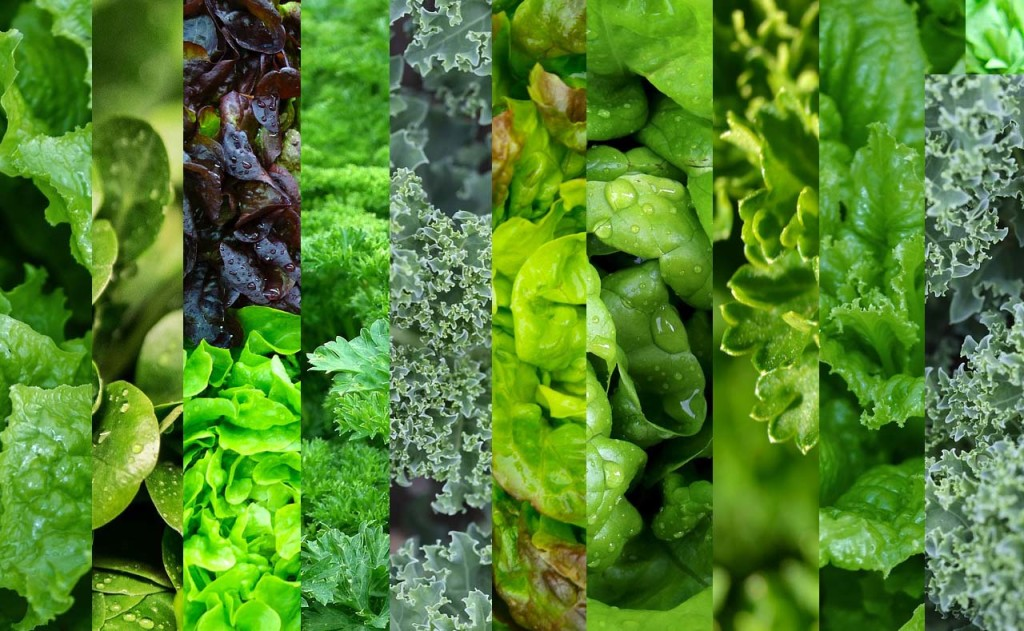 Dark leafy vegetables