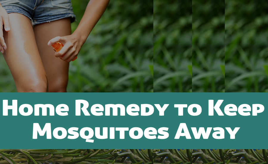 Top 10 Home Remedy to Keep Mosquitoes Away From Home